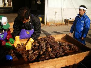 唐丹の漁業の一年・冬