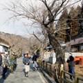 2015年2月15日 本郷桜並木整備